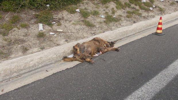 cronaca-live-agrigento-cane-abbandonato